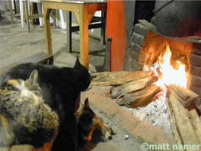 Happy, cozy cats lounge fireside at Pak Tasrip Homestay.